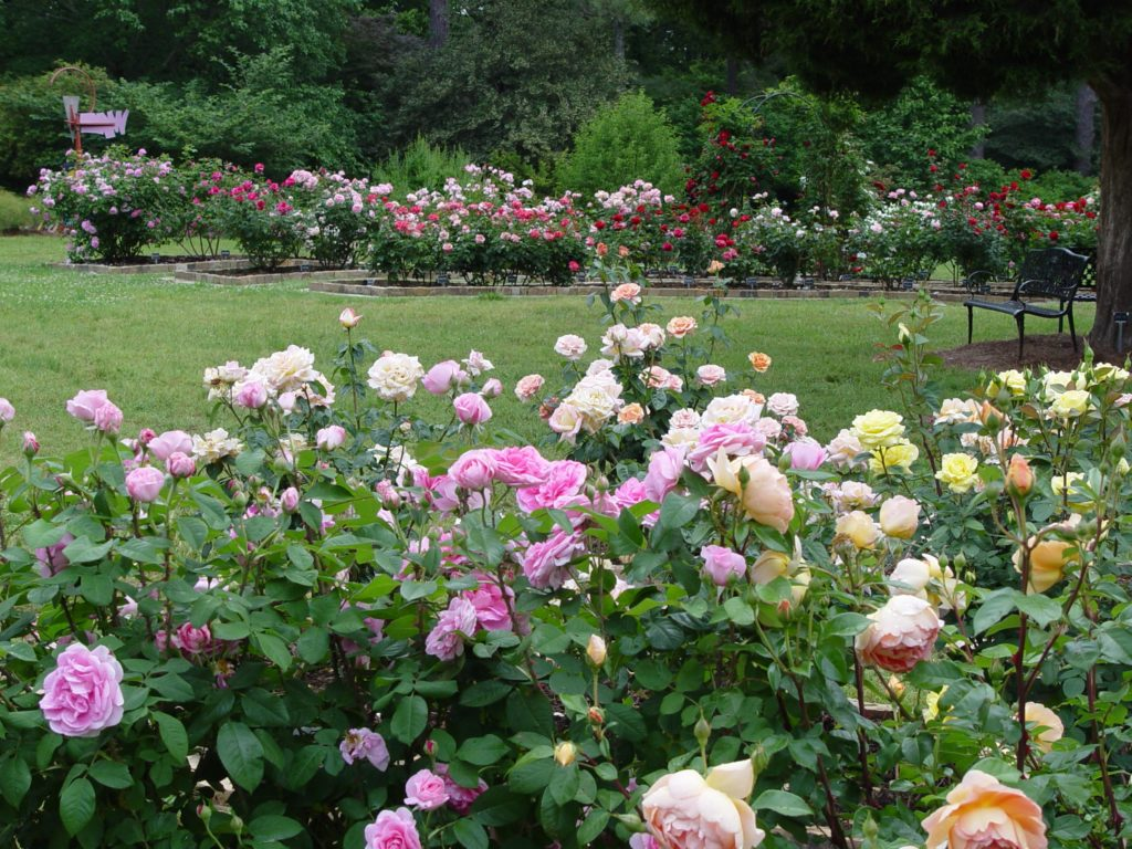 Smith-Gilbert's Rose Garden