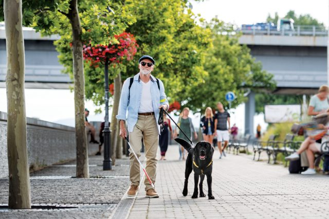A front view of senior blind man with guide dog walking outdoors in city.